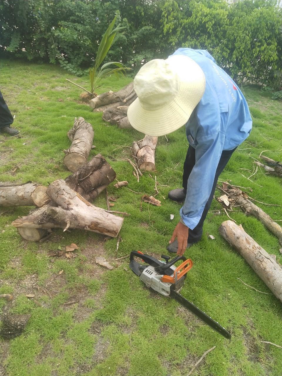 Dịch vụ cắt cành cây Lộc Nguyên