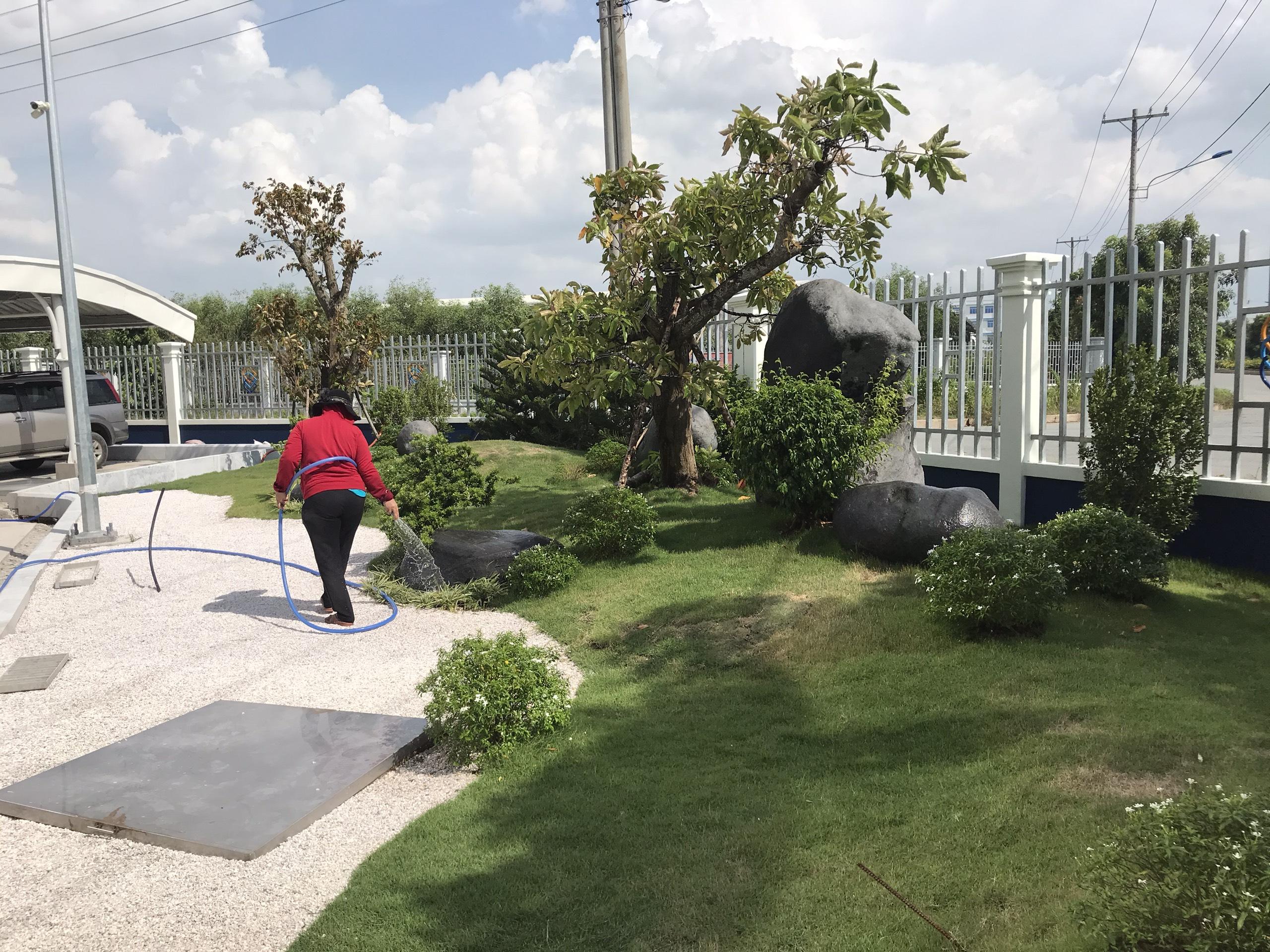 Dịch vụ chăm sóc cây xanh Lộc Nguyên
